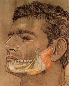 Fig. 45 A - Glândulas Salivares